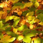 Parodose – rudens nuotaikos